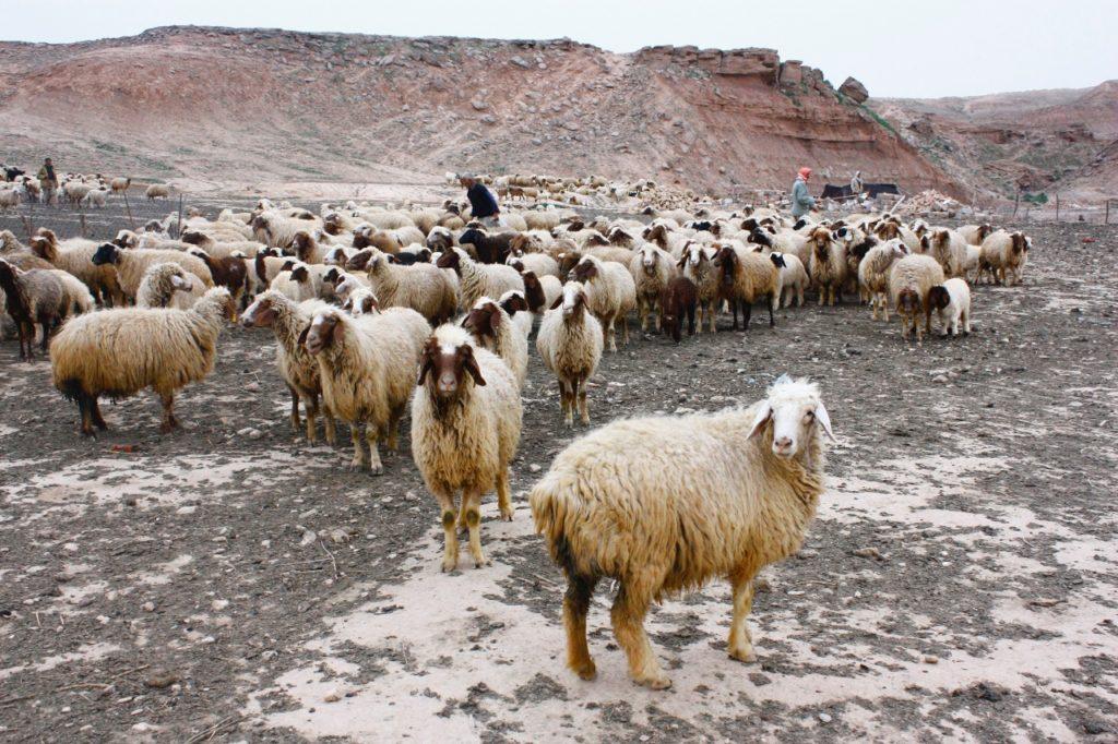 shepherds-with-sheep-1280x853