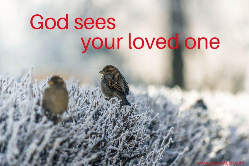 Sparrow-God-sees-loved-one-meme (1280x853)