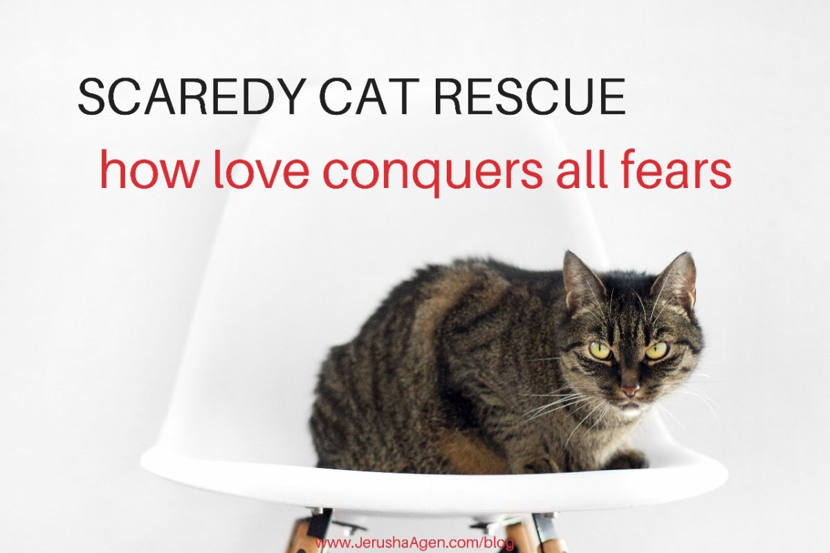 scaredy-cat-rescue-blog-title-graphic (1280x853)