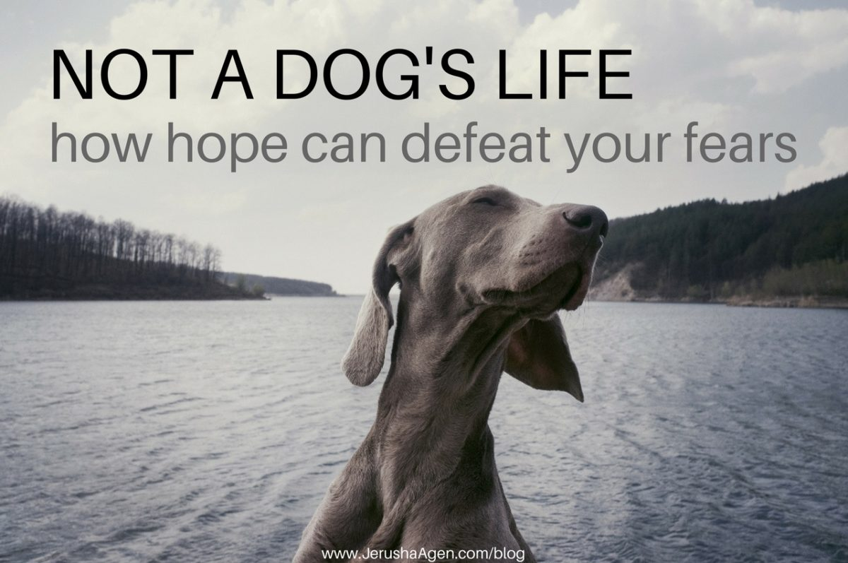 Not-a-dogs-life-blog-graphic (1280x850)