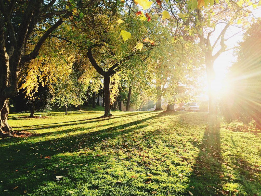 Park-sunny (1280x960)