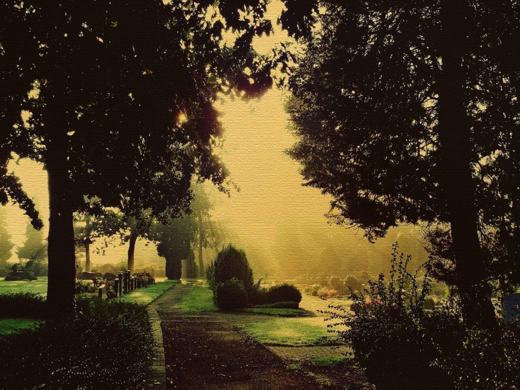 graveyard-trees (1280x960)