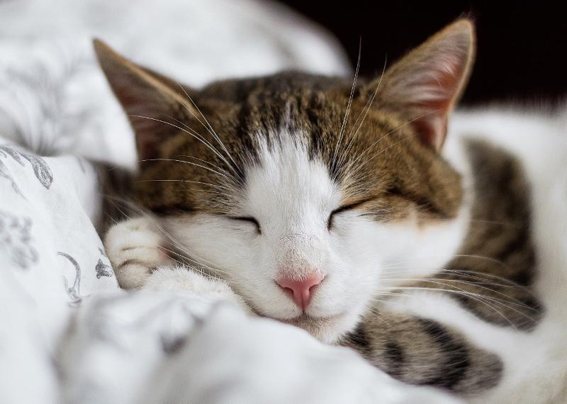 cat-sleeping (800x570)